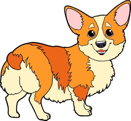 Cute cartoon character Corgi dog. Vector corgi puppy on a white background isolated. Encyclopedia page, dog breeds. 向量圖像