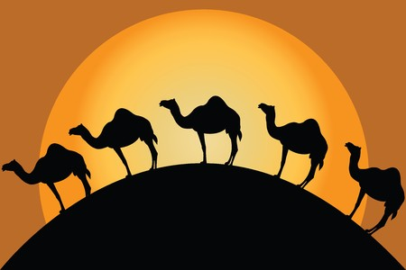 Group of camels in desert Stock Photo - 7031921