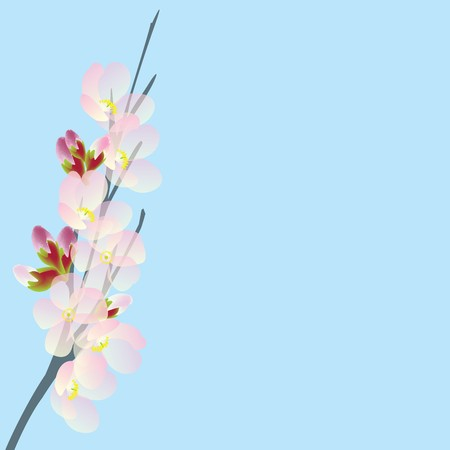 Cherry branch isolated on blue sky photo