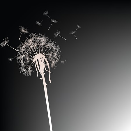 Dandelion on black background Stock Photo - 7032413