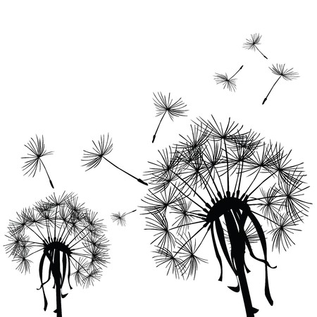 Black dandelions in the wind Stock Photo - 7032695