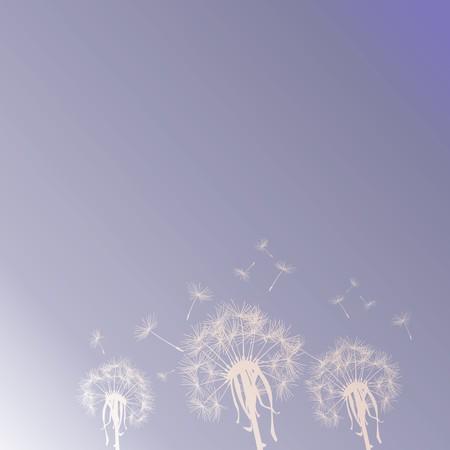 flimsy: Dandelion silhouettes on the sky