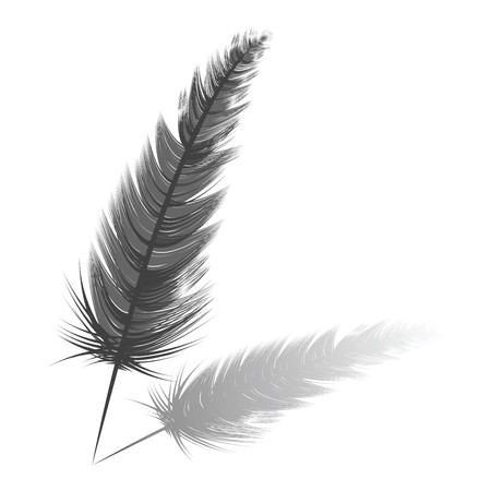 waft: Feather
