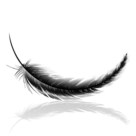 black feather: Black delicate feather with shadow Stock Photo