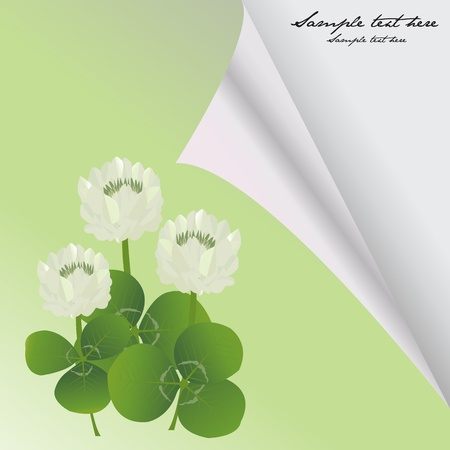 Curled corner card with clovers for St. Patrick's Day Stock Photo - 8639486