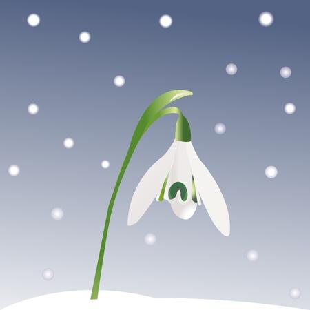 Snowdrop and snowflakes photo