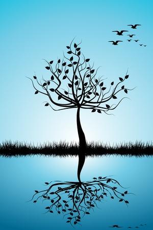 boom met vogels: Zonsondergang in de zomer veld