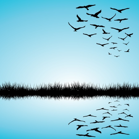 flying birds: Landscape with a lake and birds flying Illustration