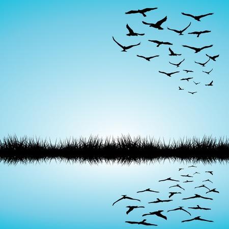 pajaros volando: Paisaje con lago y las aves que vuelan