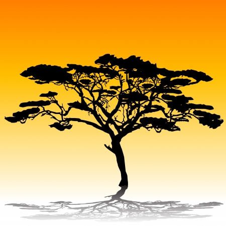 savanna: Acacia tree silhouette Illustration
