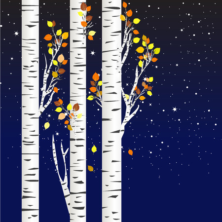 Birch trees in the autumn over a starry night