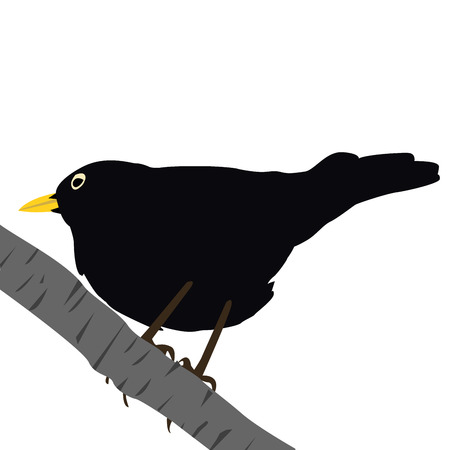 blackbird: Kos na gałęzi