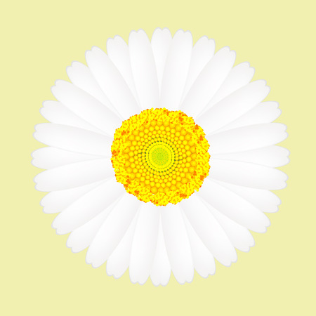 white daisy: White daisy flower isolated on yellow background Illustration