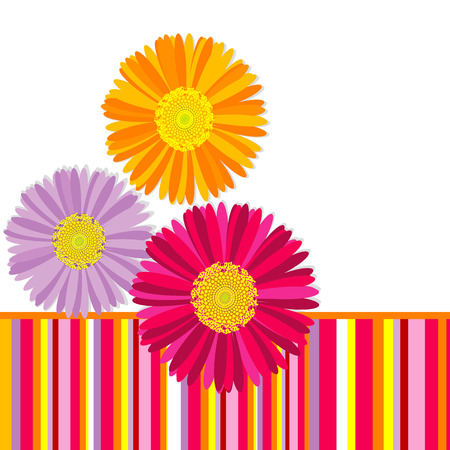 gerber: Daisy flowers greeting card