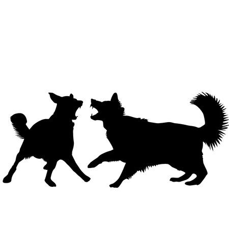 kampfhund: Hunde kämpfen