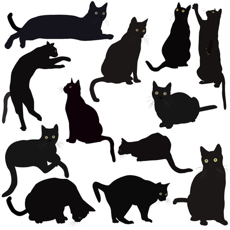black cat silhouette: Black cats silhouettes