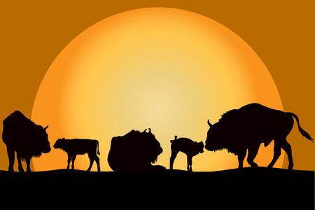 mothering: Sillouettes of bisons family at sunset Illustration