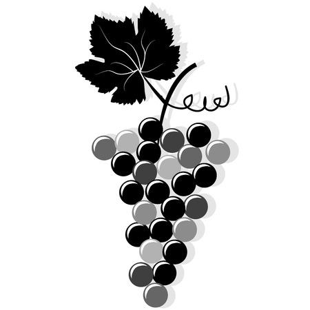 uvas: Racimo de uvas contra el fondo blanco Vectores