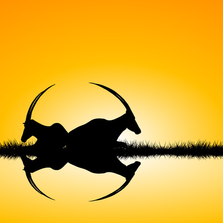 black buck: Landscape with two antelopes silhouettes on sunset