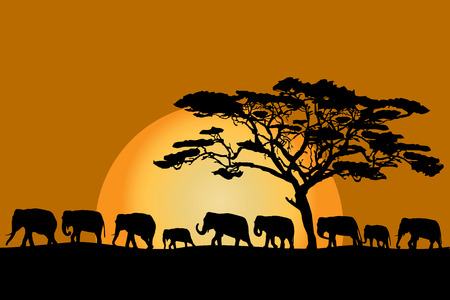 Herd of African elephants silhouettes at sunset