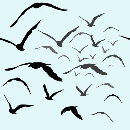 bandada pajaros: Pájaros que vuelan en el cielo patrón transparente