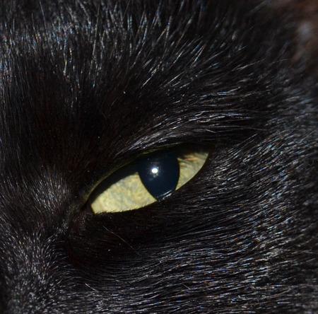 cat eye: Black cat eye