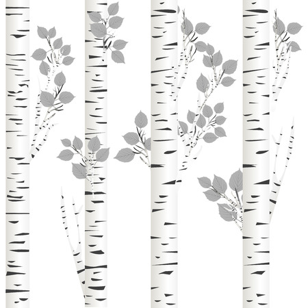 Background of white birch trees