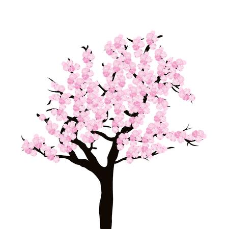 odorous: Cherry tree isolated on white background