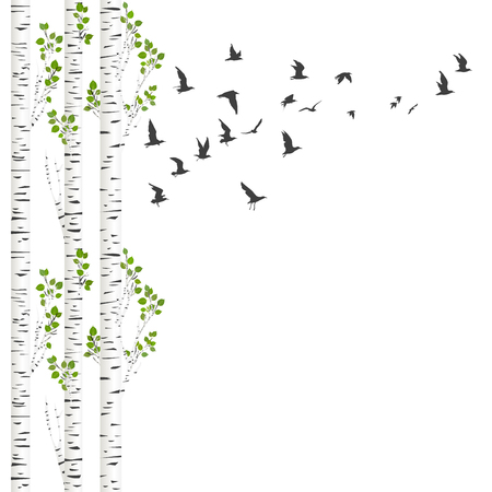Background with birch trees and birds flying