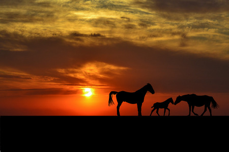 Silhouettes of horse family at sunset