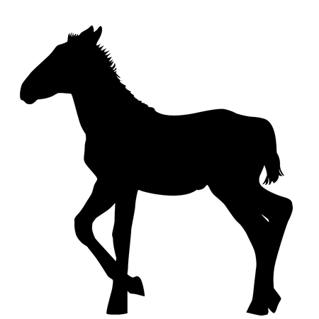 Foal silhouette on white background Illustration