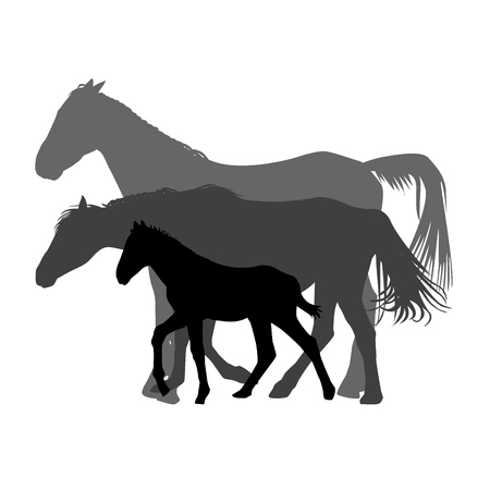 Silhouettes of horses family isolated on white background