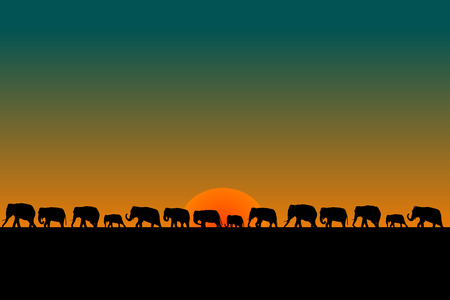 Herd of elephants at sunset