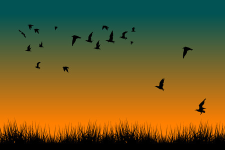 Field of grass and silhouettes of flying birds at sunrise illustration. Illustration