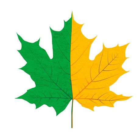 Half green and half yellow autumn leaf 向量圖像