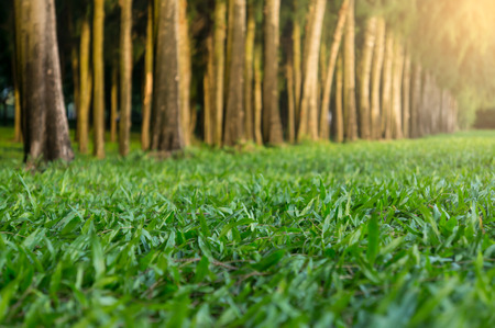 Green grass and tree rows