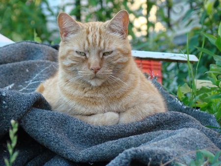 Old Tom Cat Stock Photo