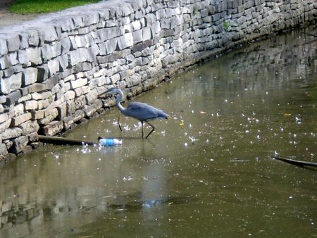 Water pollution harms water birds Stock Photo