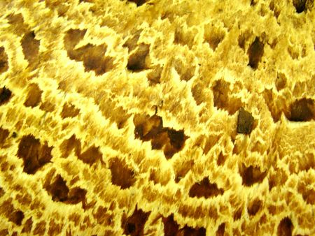 bacterial strain: Lab Sample H1N1 fku Stock Photo
