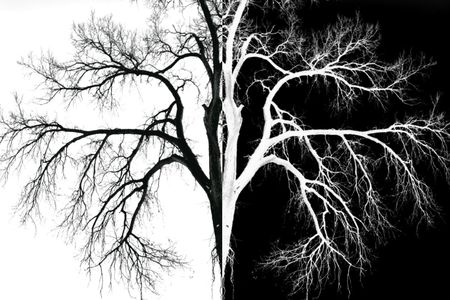 Black And White Tree Mirror Image