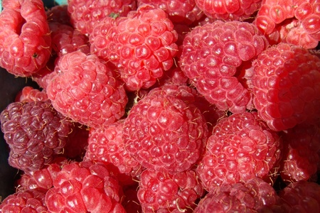 fresh organic raspberries                              photo