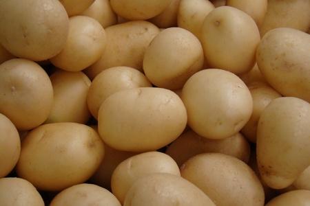 fresh organic white potatoes                               Stock Photo