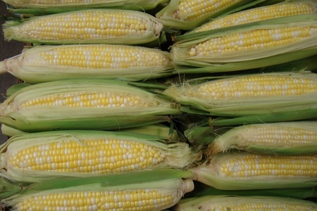 fresh organic corn on the cob                      photo