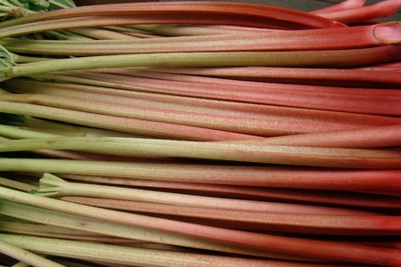 fresh organic rhubarb                              photo