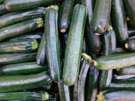 farm fresh zucchini Stock Photo