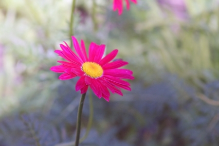 isolated colourful flower
