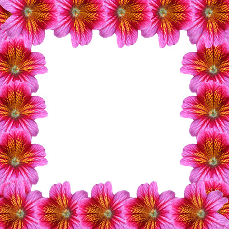 Flower Frame Stock Photo - 29877255