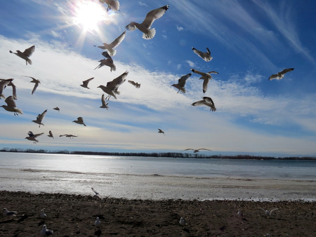 Flying Gulls