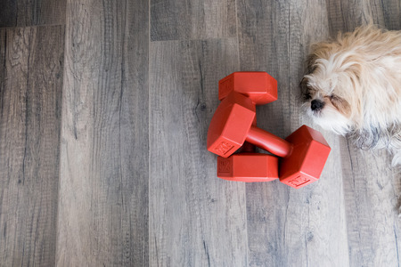dumbell: A pair of dumbell with a sleeping dog Stock Photo