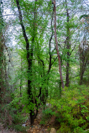 rea: Trees in the forest in mountain Stock Photo